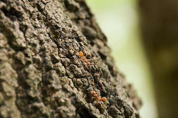 Red fire ants on branch in nature green background