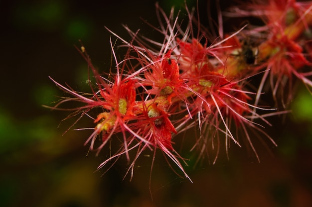 Red flowe