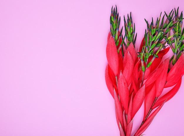 Red flower of billbergia