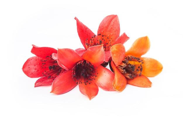 白い壁に赤い花キワタ