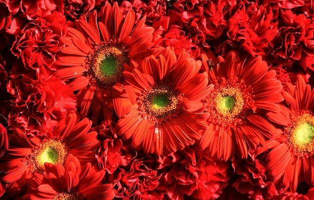 赤い花のクローズアップ