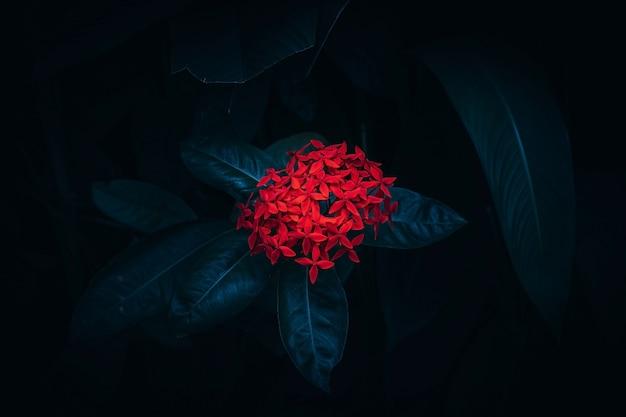 黒の背景に赤い花、セレクティブフォーカスの背景ぼかし