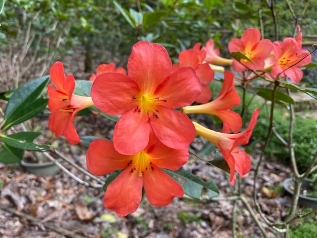 Красный цветок в саду