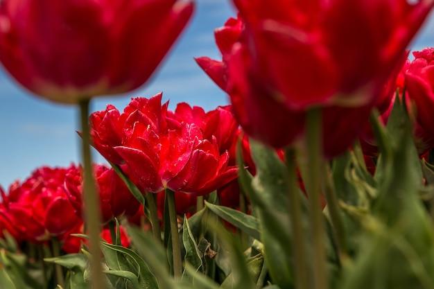 フィールドの赤い花