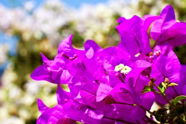 태국 치앙마이 정원의 붉은 꽃