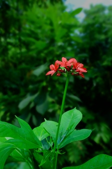 Red flower, tiny red flower in garden, red flower  bouquet.
