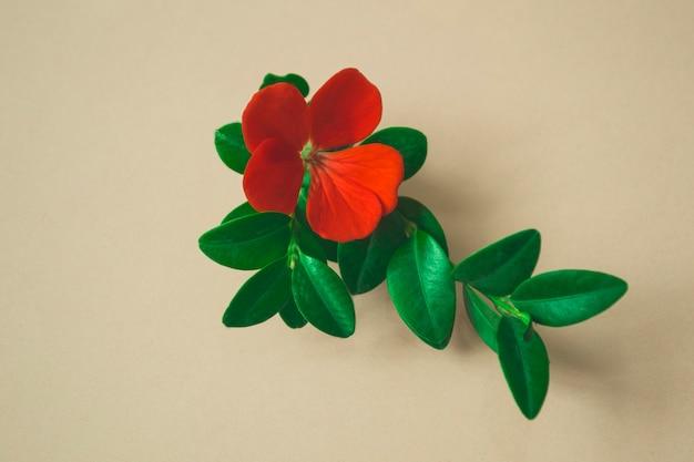 Красный цветок с зелеными листьями на бежевом фоне