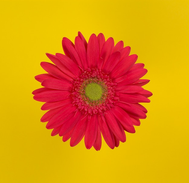 Red flower over yellow background