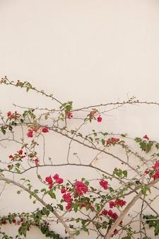 赤い花の枝、ニュートラルベージュのコンクリートの壁の葉