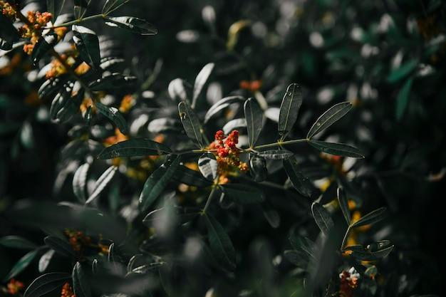 식물에서 자라는 붉은 꽃