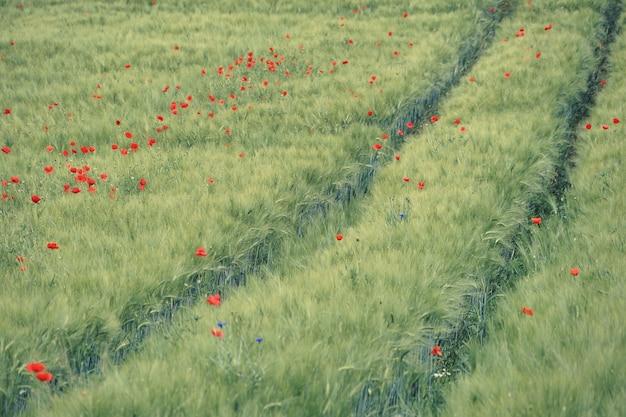 昼間の野原に赤い花