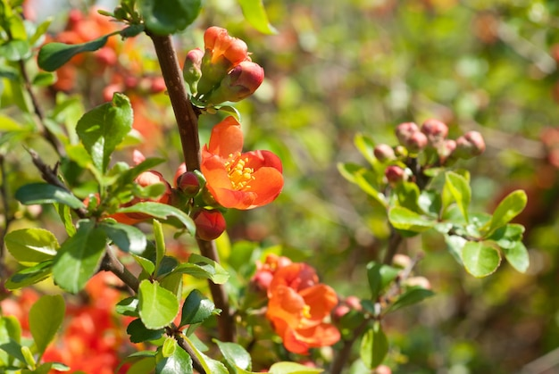 庭の赤い花