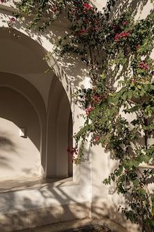 日光の影とベージュの壁に赤い花