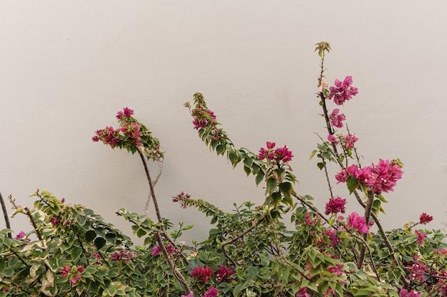 ベージュの壁に赤い花。
