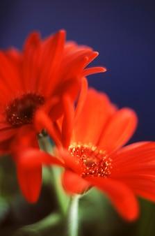 Красные цветы на синем фоне