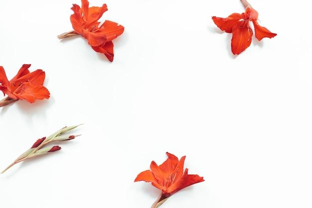 白い背景に赤い花。花の構成。フラットレイ、上面図、コピースペース。夏、秋のコンセプト。