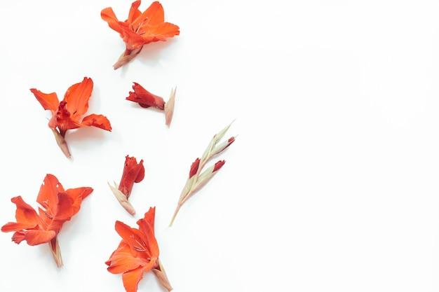Красные цветы на белом фоне цветочная композиция плоская лежала вид сверху копия пространства лето осень