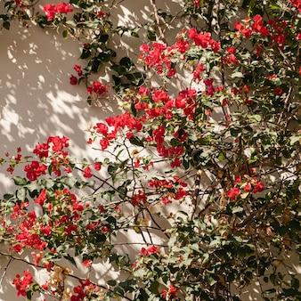 赤い花は、ニュートラルベージュの壁に枝と日光の影を植えます