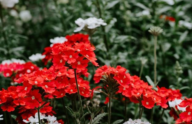 Red flowers in tilt shift lens, selective focus background blur