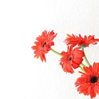 Fiori rossi su sfondo bianco per anniversario, compleanno, cornice floreale matrimonio