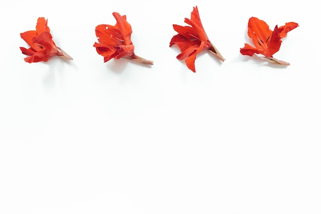 Red flowers on white background. flowers composition. flat lay, top view, copy space. summer, autumn concept.
