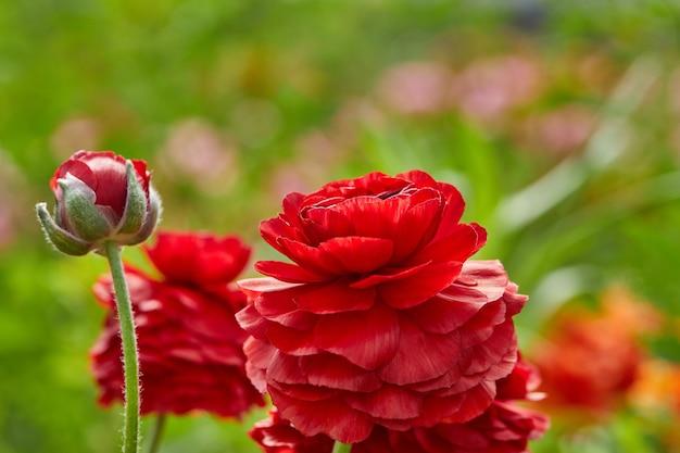 Красные цветы с размытым фоном растительности