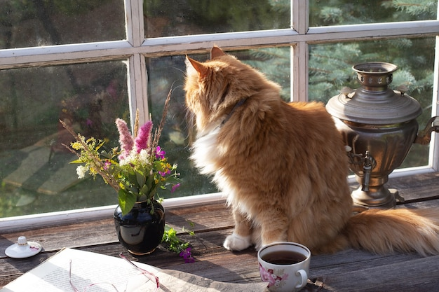Red fluffy cat sitting on the terrace table in the country house and looking into the window in summer day