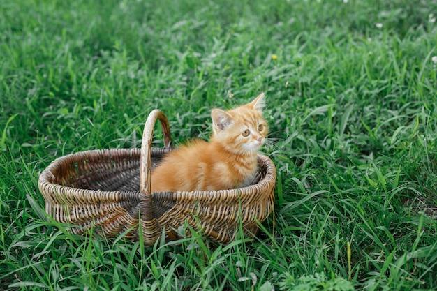 自然のバスケット屋外の小さな茶色のおかしい猫ペットの緑の草の上の赤いふわふわの子猫