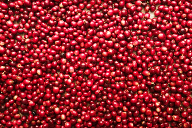Red fresh cherry coffee beans background