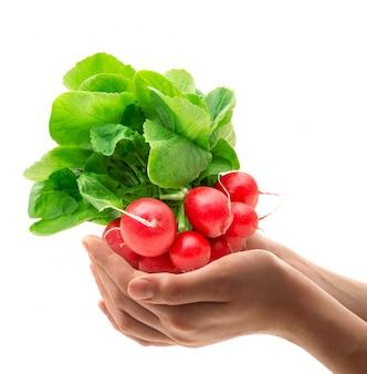 Red fresh radishes