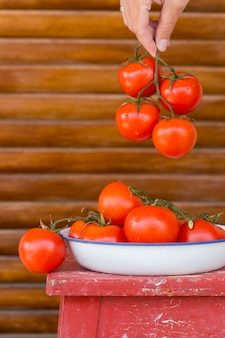 Red fresh tomatoes on a branch local food and produce