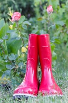 Красные садовые резиновые сапоги на зеленой траве и размытый фон с розовым кустом