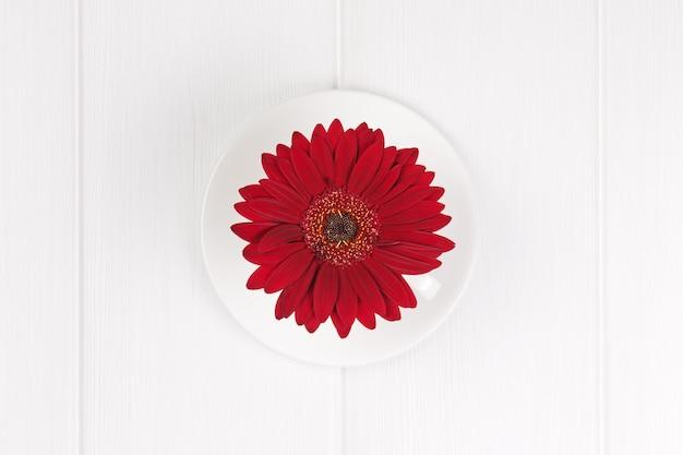 Красный цветок герберы в чашке и соусе на белом деревянном столе. крупный план.