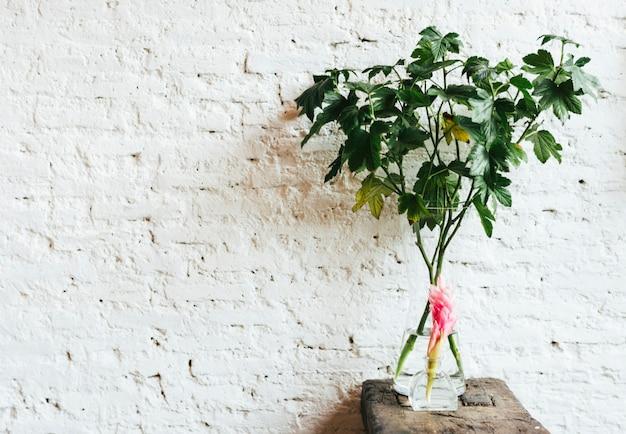 木製のテーブルに赤い生姜の花