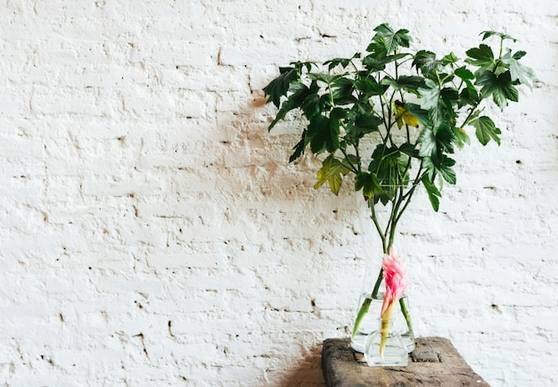 Fiore di zenzero rosso su un tavolo di legno