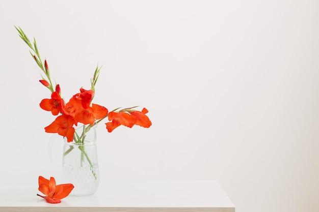 白い背景の上のガラスの水差しの赤いグラジオラス