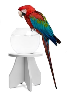 Red-and-green macaw perching on empty fish bowl in front of white background