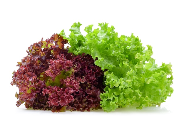 Red and green oak lettuce isolated on white.