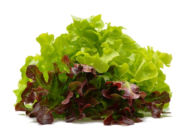 Red and green oak lettuce with water drops on white background.