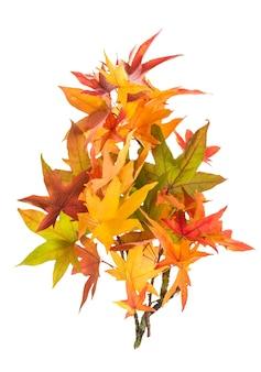 흰색 배경에 고립 된 빨간색 녹색 노란색가 단풍 잎
