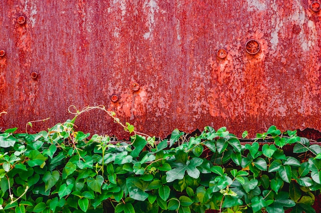 Red grunge rusted metal texture wall background with green leaf