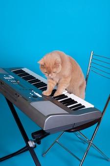 Рыжий британский кот нажимает клавиши электронного синтезатора, стоя на стуле