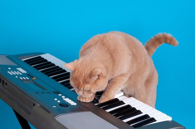 Рыжий британский кот нажимает на клавиши электронного синтезатора