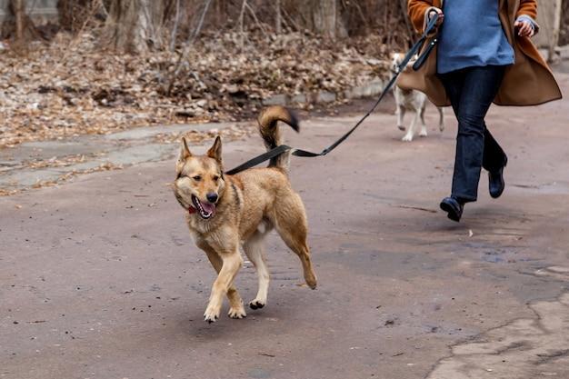 Рыжий смешанный пес с хозяйкой гуляет по парку. портрет рыжей собаки на улице