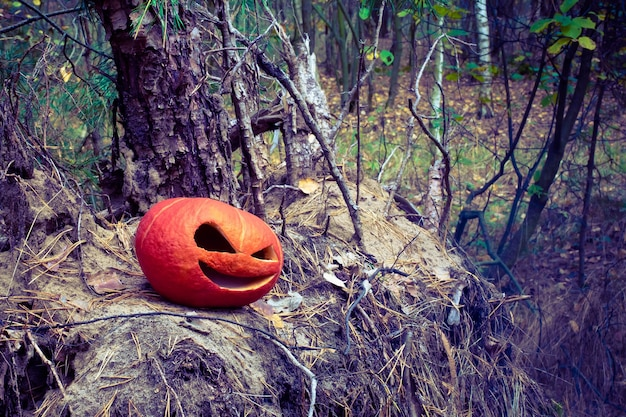 Red halloween pumpkin in the autumn forest on an old stump and pile of needles from christmas trees