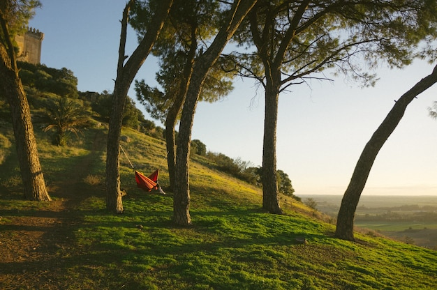 Red hammock near green-leafed trees on a hill during daytime