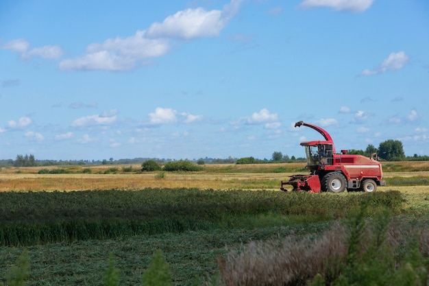 A red harvester harvests millet in a rural field. grain collection concept on a sunny summer day, side view.
