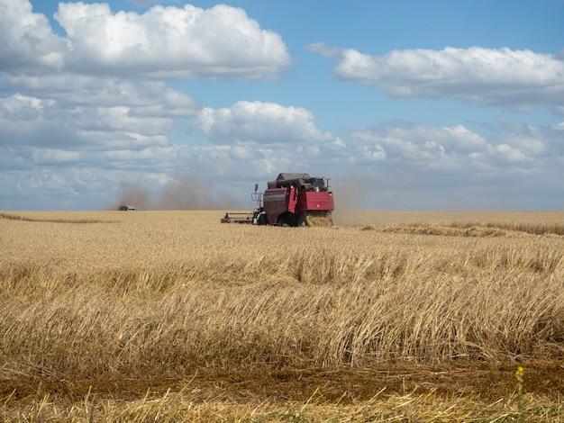 夏の野外収穫における赤い収穫機。畑で黄金の熟した小麦を集めるためのコンバイン農業機械。