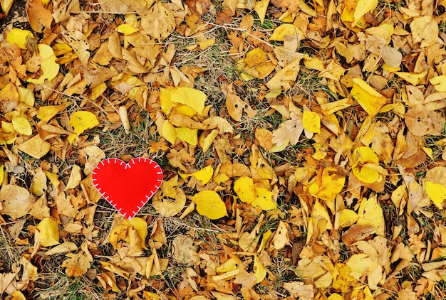 Red heart of felt close-up on the background of autumn yellow fallen leaves.