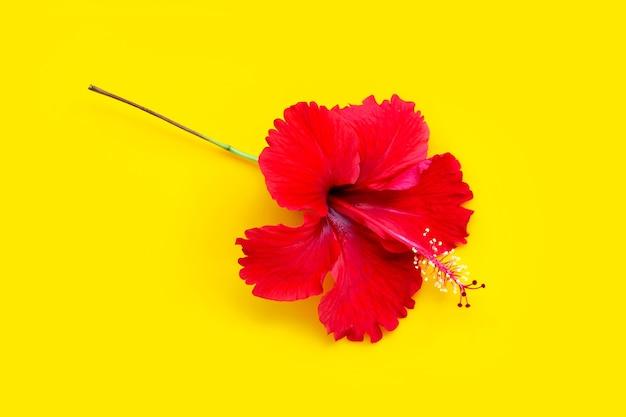 黄色の背景に赤いハイビスカスの花。